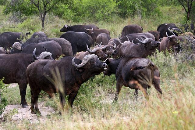 Národné parky v Juhoafrickej republike