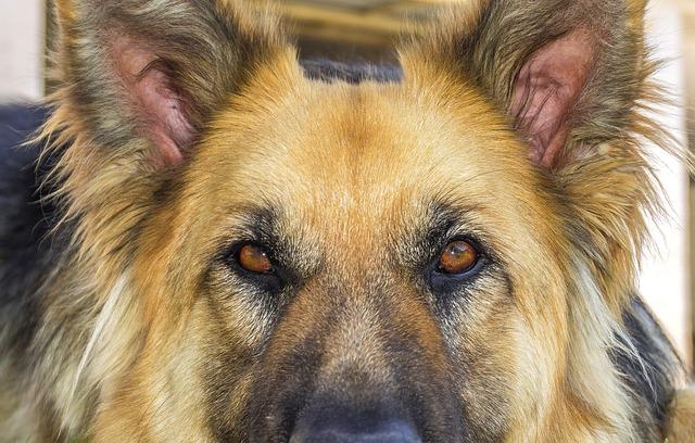 domáci pes.jpg